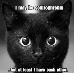 funny-pictures-i-may-be-schizophrenic-cat